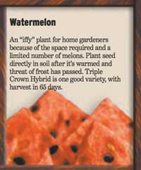 slice